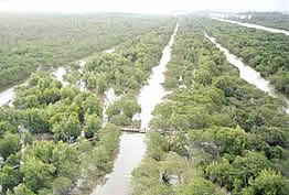 Oleodutos enterrados em área de mangue - REDUC PETROBRAS