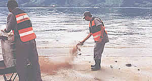 Aplicação de turfa vegetal em limpeza de praia