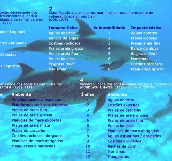 golfinhos_texto