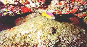 Costão rochoso submerso - elevada biodiversidade
