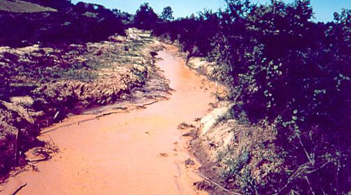 Figura 7 - Mortandade de peixes em rio com excesso de material em suspensão. Fonte: CETESB
