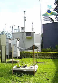 Vegetação bioindicadores